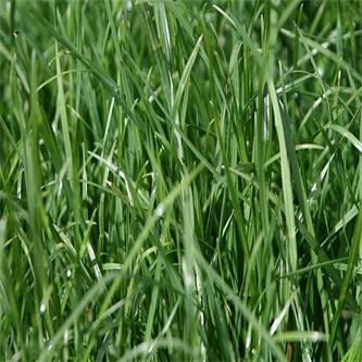 Spring Agronomy Update