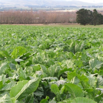 Summer Agronomy Update