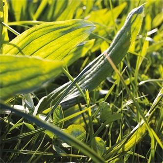 Ecotain® environmental plantain