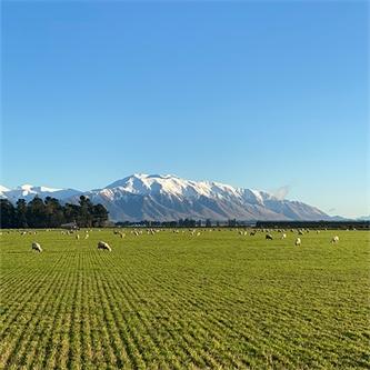 The new breed of Kiwi determination