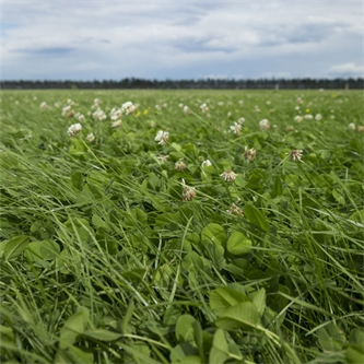 Maximising Stock Performance with Platform Perennial Ryegrass*