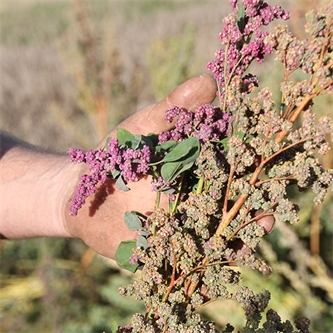 Varied crops bring promise to provinces
