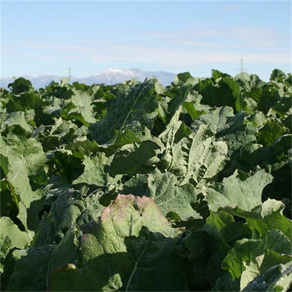 Agronomy Winter Update 2021
